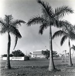 The Mailman/Hollywood building is flanked on both sides by Royal Palm trees, circa 1980