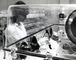 Laboratory technician working with germ-free mice in the primary genetic center in the Germ-free laboratory at the Leo Goodwin Institute for Cancer Research
