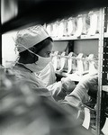 Laboratory technician working in one of the extensive facilities for rearing barrier maintained experimental animals by Stan O'Dell