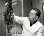Dr. Moed examines seaweed found in the Atlantic Ocean