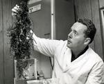 Dr. Moed examines seaweed found in the Atlantic Ocean