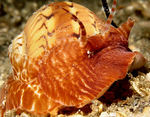 Invertebrate Photography: 3rd Place