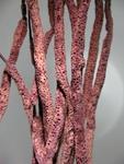 <em>Pseudoplexaura wagenaari </em>(Stiasny, 1941)